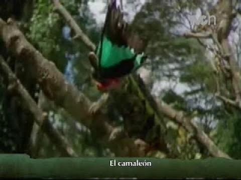 Instinto Animal - El Camaleón
