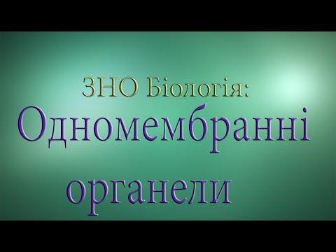 ЗНО Біологія  Одномембранні органели
