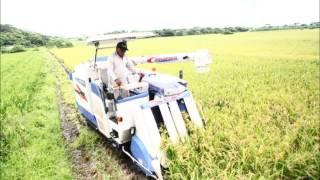 平成29年度稲刈りスタート