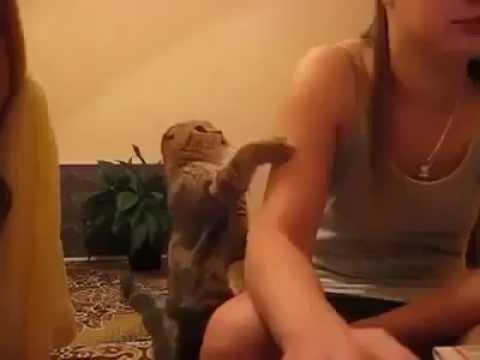 posmotret-ne-skachivaya-domashnee-porno-video