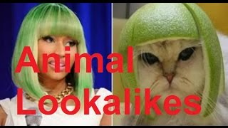 Funny Animal Lookalike Compilation (Animal Look-alikes) - DDOF