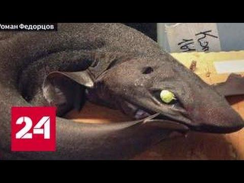 Мурманский моряк шокировал соцсети фотографиями морских чудовищ