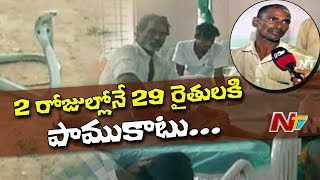 29 Farmers Injured With SnakeBite in Avanigadda   Krishna District   NTV