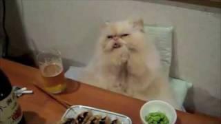 Thumb Remix de Paper Planes con videos virales de perros y gatos