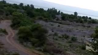 Velgodu forest,animals