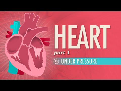 The Heart. part 1 - Under Pressure: Crash Course A&P #25