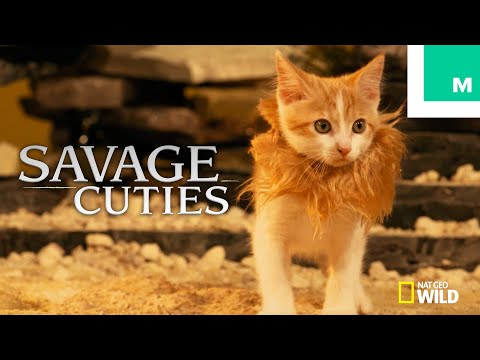 Kittens Puppies Recreate Savage Kingdom With Game Of Thrones Charles