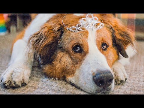 A DOG'S JOURNEY All Movie Clips + Trailer (2019)