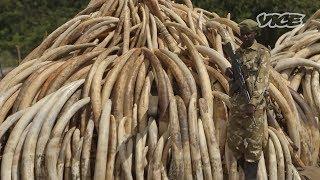 Shoot to Kill:  VICE Investigates the Kenya Wildlife Service