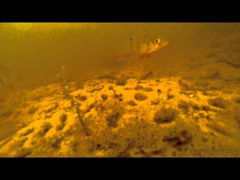 дзержинский затон рыбалка