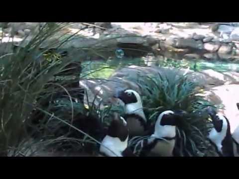 Penguins & Bubbles - Fort Wayne Children's Zoo