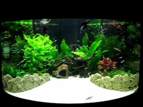 Juwel Trigon 190 Fish Tank Aquarium in its full glory - YouTube