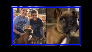 | Dog Rescue StoriesStranger Gives Up Place In Line So Two Young Boys Can Get The Puppy They Hope...