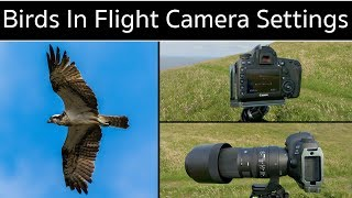 Camera Settings for Photographing Birds in Flight + Canon 5D Mark IV and Sigma 150-600mm Tips