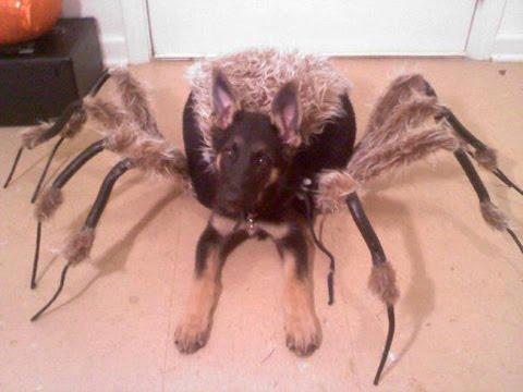 Mutant Spider Dog (SA Wardega)