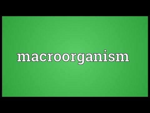Header of Macroorganism