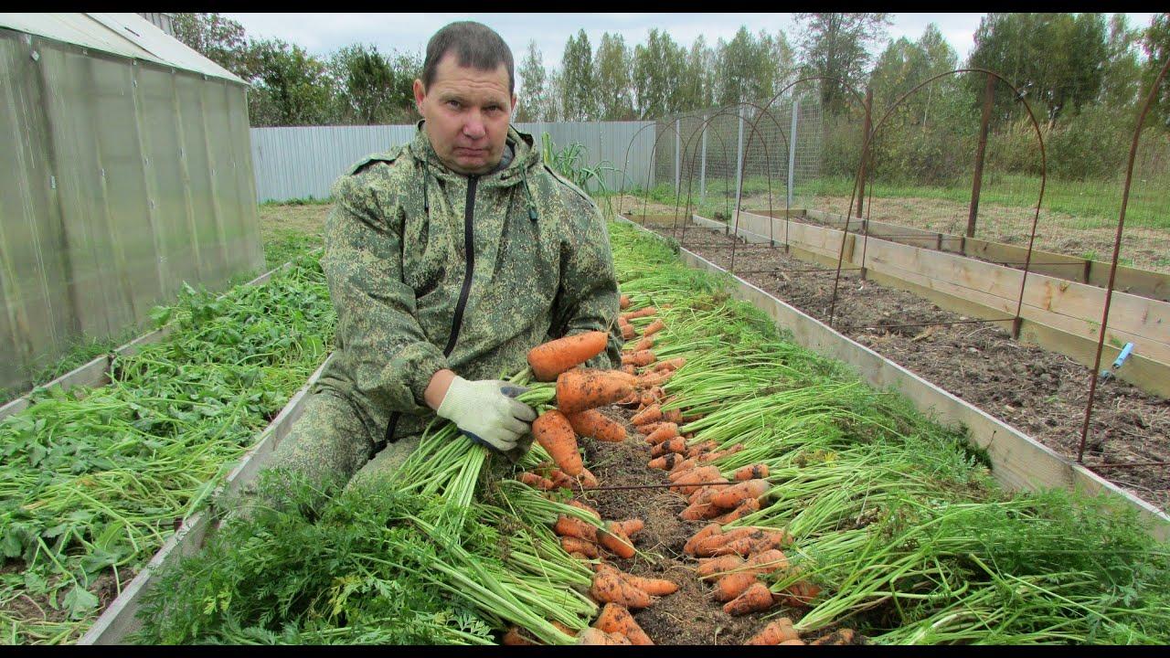 Оборудование для выращивания моркови 35
