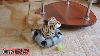 Cute Fluffy Kitten Play with New Toy
