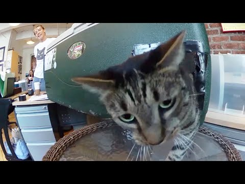 How to Make a Feral Cat Shelter from a Cooler…Fast and Easy!