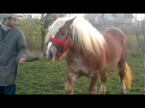 Calul lui Marian din Inand de vanzare