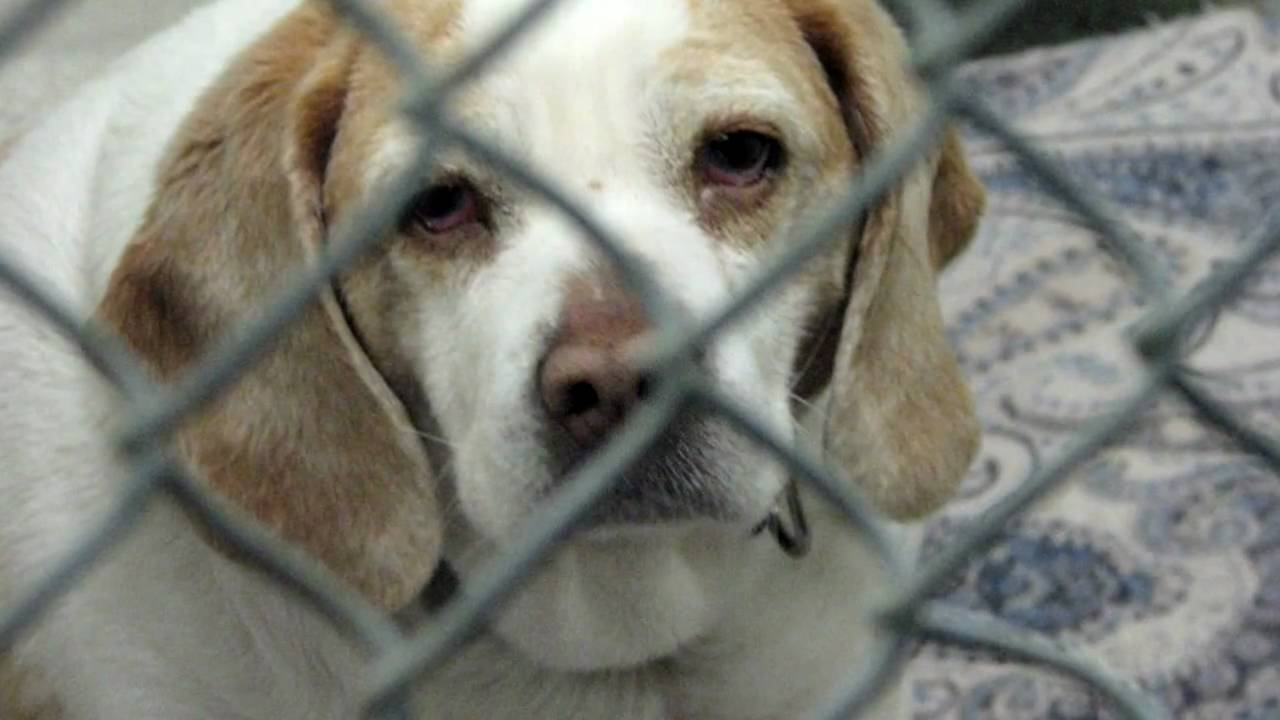 Sad Dogs And Cats In Shelters