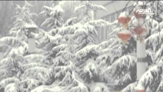 الزائر الأبيض يستبق احتفالات السنة الصينية الجديدة