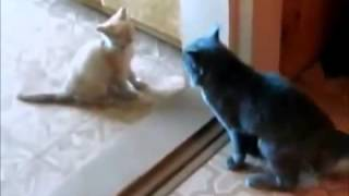 Прикольные кошки 3. cool and funny cats