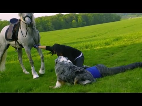 Was Tiere So Denken 37 - PferdeSpecial - Der Hasenrunterholer