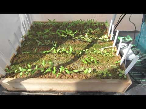 How To Grow Seedlings: 3 Week Update