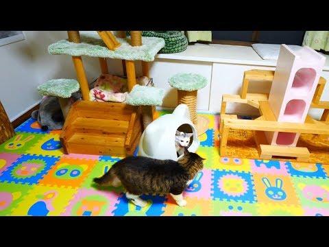 何度も三毛猫姉さんの前を横切るボス猫