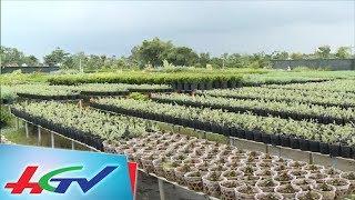 Nhiều giống hoa mới đón tết 2018   BẢN TIN KINH TẾ NÔNG NGHIỆP - 26/11/2017