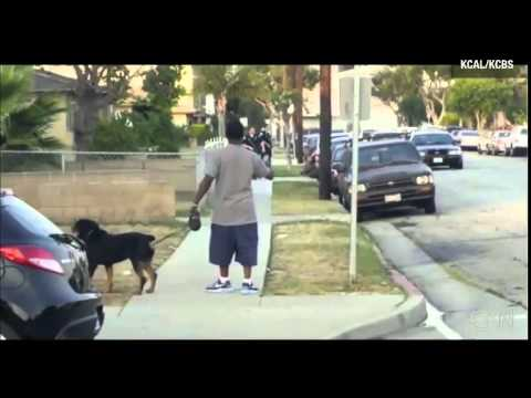 Dog shot in front of arresting owner, Were police justified in shooting dog? Houston TX