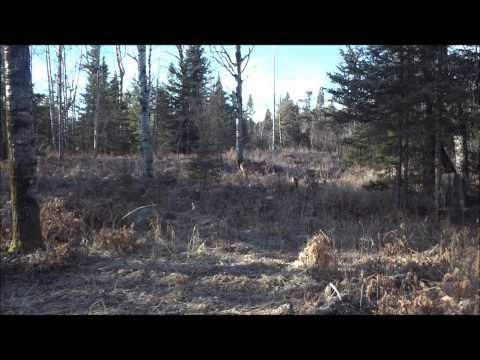 2012 Michigan deer hunting firearm season