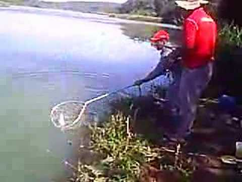 Pescaria de curimba