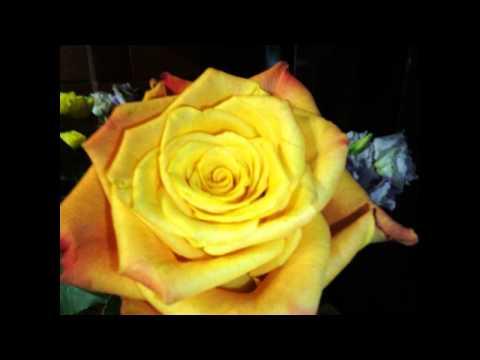 Походные песни - Распускаются розы в твоих руках