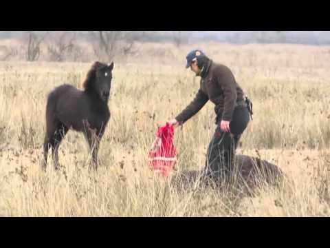 Дикая лошадь благодарит спасителей