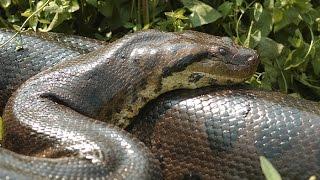 Pantanal Matogrossense: Um Paraíso Selvagem