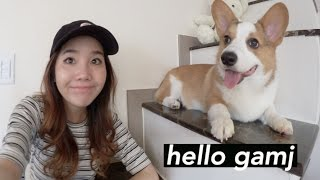 A Chill Afternoon with Sunny & The Gamja Corgi 🐶