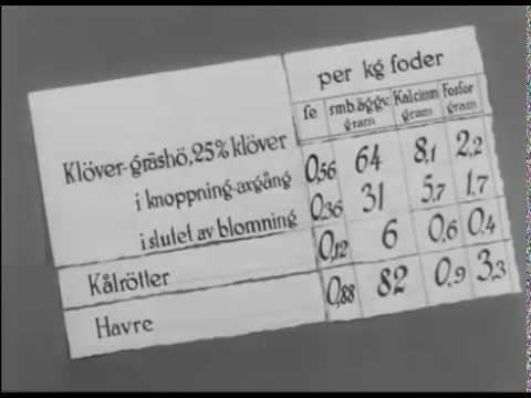 Mjölkkornas utfodring (Ca 1949 SoL-film) (Visad: 6ggr, Betyg: , Antal kommentarer: 0st)