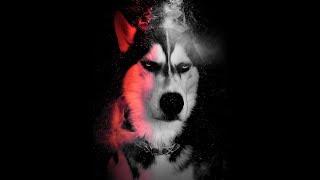 Husky | Những tình huống không đỡ nổi của đại ngáo