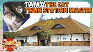 Japan has a CAT as STATION MASTER and we wanna see why!