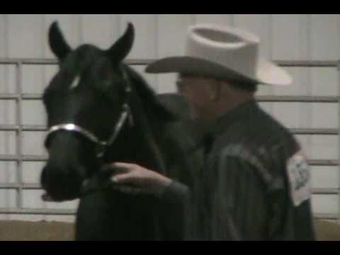 AQHA Grand Champion Gelding Quarter Horse