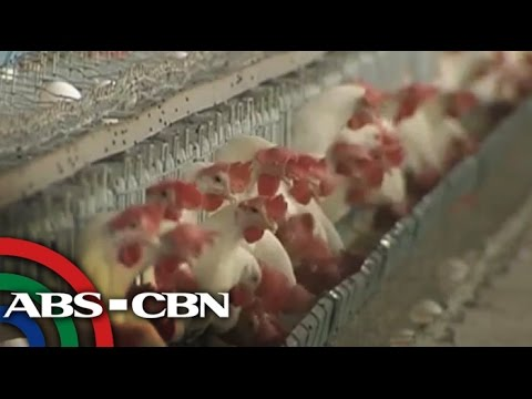 Department of Agriculture: No chicken shortage
