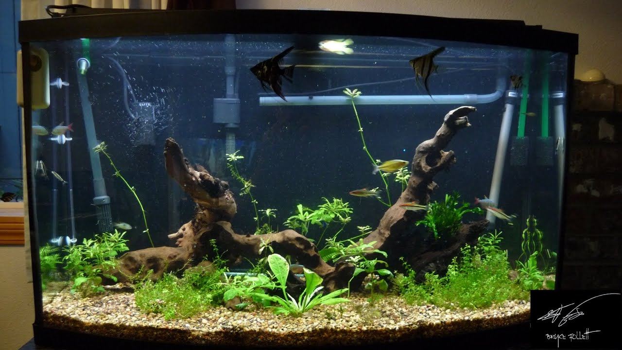 Petstore employees 46 gal bowfront aquarium youtube for National geographic fish tank filter
