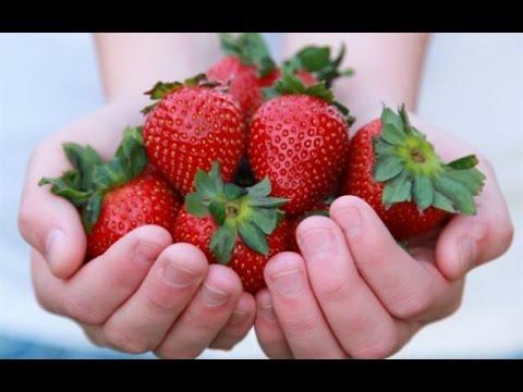 0 - Як приготувати ягоди калини від кашлю та застудних захворювань в домашніх умовах