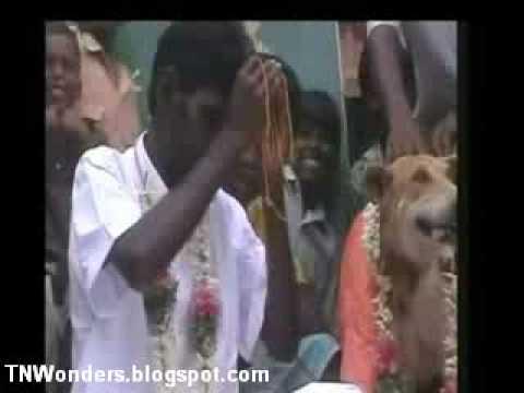 هندي يتزوج كلبه تكفيراً لأحد ذنوبه Indian marries dog