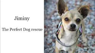 Jiminy - The Perfect Dog rescue