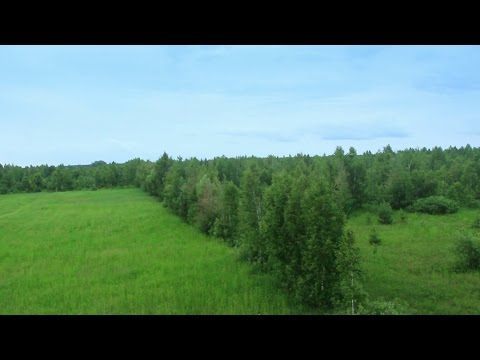 Pine tree forest aerial view. Air balloon pov. Stock Footage