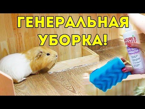 Уборка В Стеллаже Морских Свинок / SvinkiShow