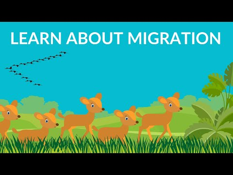 Why do birds and animals migrate? | Birds migration video| Video for Kids
